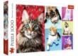 Trefl 10591 - Boldog macskák - 1000 db-os puzzle
