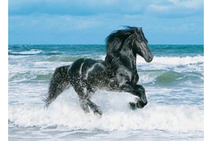 Clementoni 30175 - Fekete ló - 500 db-os puzzle