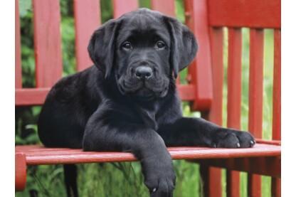 Clementoni 30346 - Fekete kutya - 500 db-os puzzle