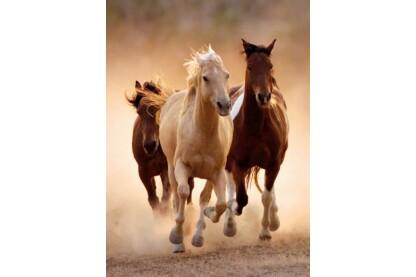 Clementoni 39168 - Vágtázó lovak - 1000 db-os puzzle