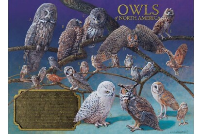 Cobble Hill 80011 - Owls of North America - 1000 db-os puzzle