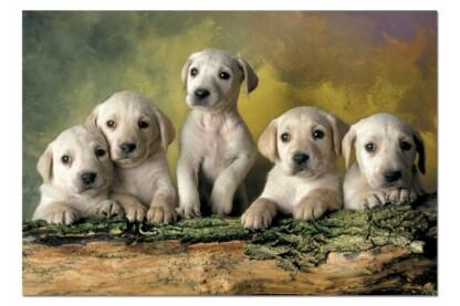 Educa 14802 - Labrador retrieverek - 500 db-os puzzle