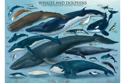 EuroGraphics 6000-0082 - Whales and Dolphins - 1000 db-os puzzle