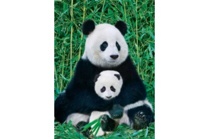 EuroGraphics 6000-0173 - Panda and Baby - 1000 db-os puzzle