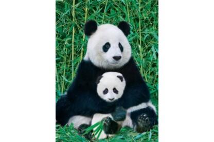 EuroGraphics 6000-0173 - Panda and Baby - 1000 db-os puzzle