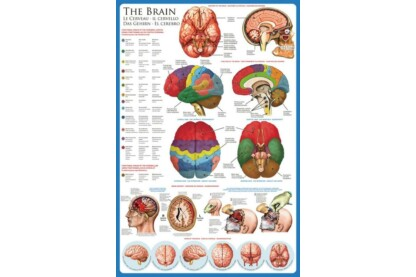 EuroGraphics 6000-0256 - The Brain - 1000 db-os puzzle