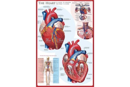 EuroGraphics 6000-0257 - The Heart - 1000 db-os puzzle