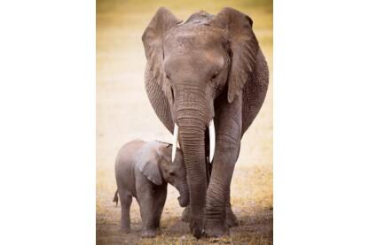 EuroGraphics 6000-0270 - Elephant & Baby - 1000 db-os puzzle