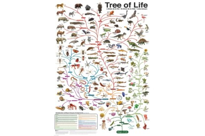 EuroGraphics 6000-0282 - The Tree of Life - 1000 db-os puzzle