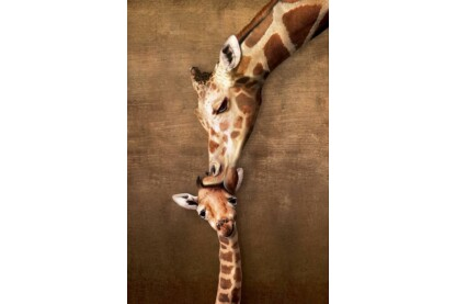 EuroGraphics 6000-0301- Giraffe Mother's Kiss - 1000 db-os puzzle