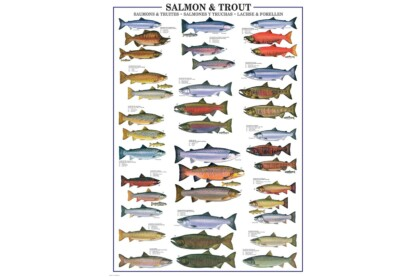 EuroGraphics 6000-0311 - Salmon & Trout - 1000 db-os puzzle