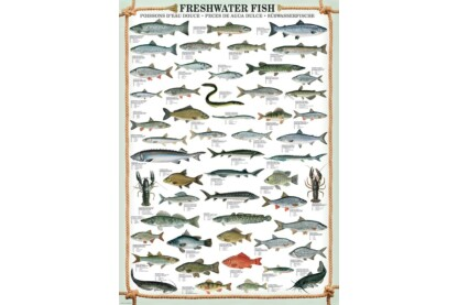 EuroGraphics 6000-0312 - Freshwater Fish - 1000 db-os puzzle