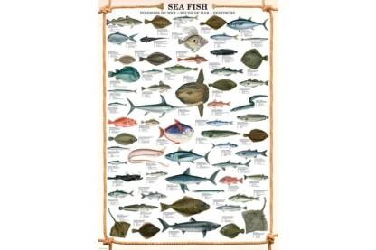 EuroGraphics 6000-0313 - Sea Fish - 1000 db-os puzzle