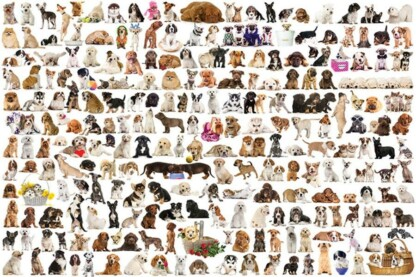 EuroGraphics 6000-0581 - The World of Dogs - 1000 db-os puzzle