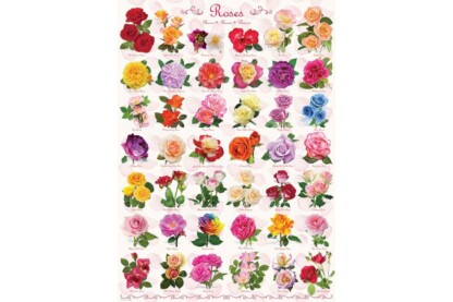 EuroGraphics 6000-0593 - Roses Collage - 1000 db-os puzzle