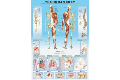 EuroGraphics 6000-1000 - The Human Body - 1000 db-os puzzle