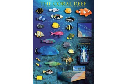 EuroGraphics 6000-1170 - The Coral Reef - 1000 db-os puzzle