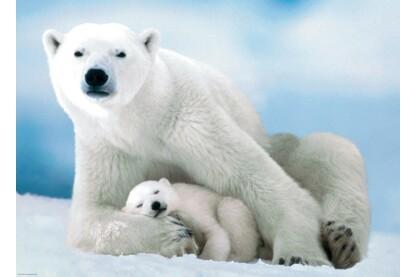 EuroGraphics 6000-1198 - Polar Bear & Baby - 1000 db-os puzzle