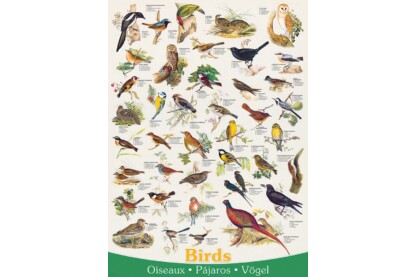 EuroGraphics 6000-1259 - Birds - 1000 db-os puzzle