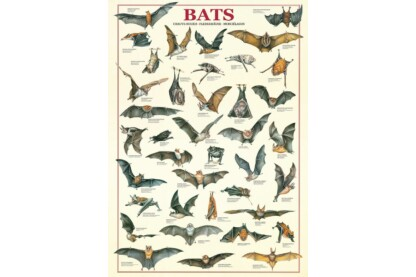 EuroGraphics 6000-3820 - Bats - 1000 db-os puzzle