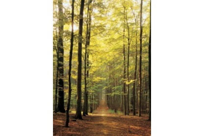 EuroGraphics 6000-3846 - Forest Path - 1000 db-os puzzle