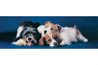 EuroGraphics 6005-4491- Panoráma puzzle - Dogs - 750 db-os puzzle