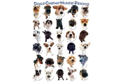 EuroGraphics 8300-1510 - Dogs - 300 db-os XL puzzle