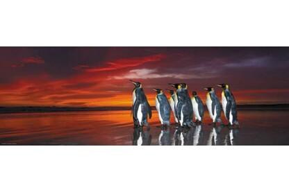 Heye 29858 - Panoráma puzzle - Király pingvinek, Edition Humboldt - 1000 db-os puzzle