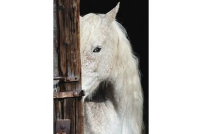 Schmidt 58278 - Beautiful horse - 1000 db-os puzzle