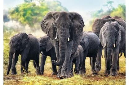 Trefl 10442 - Afrikai elefántok - 1000 db-os puzzle