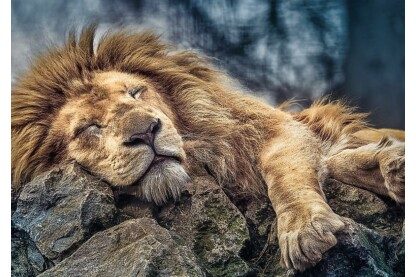 Trefl 10447 - Alvó oroszlán - 1000 db-os puzzle