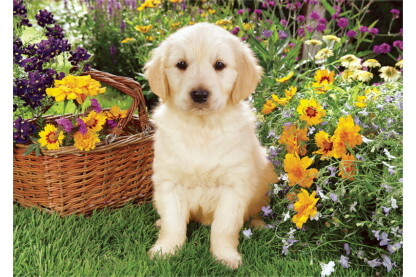Trefl 37160 - Labrador kölyök a kertben - 500 db-os puzzle