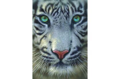 Educa 15971 - Fehér tigris - 500 db-os puzzle