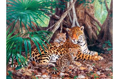 Castorland C-300280 - Jaguárok a dzsungelben - 3000 db-os puzzle